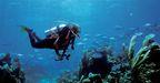 diver_low.jpg